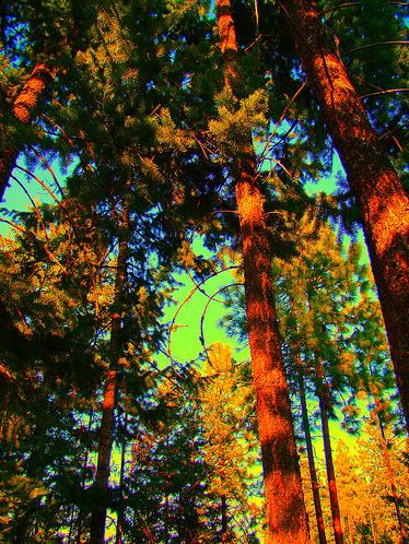 treees2